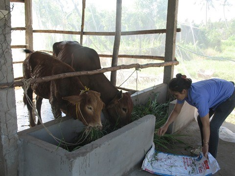 La pauvrete cede du terrain chez les Khmers a Soc Trang hinh anh 1