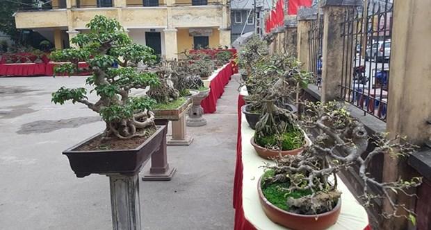 Trieu Khuc, la passion des bonsais hinh anh 3