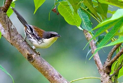 Mise en œuvre de huit programmes dans la Reserve mondiale de biosphere Lang Biang hinh anh 2