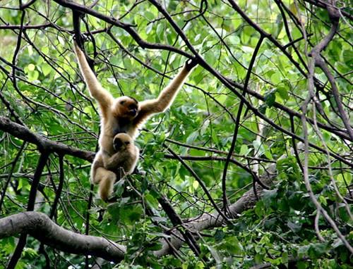 Mise en œuvre de huit programmes dans la Reserve mondiale de biosphere Lang Biang hinh anh 3