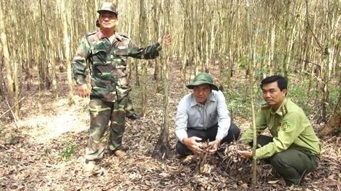 Kien Giang renforce la prevention des incendies de foret en saison seche hinh anh 2