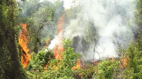 Kien Giang renforce la prevention des incendies de foret en saison seche hinh anh 1