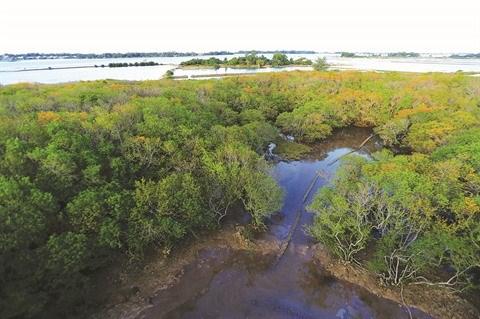 Reboisement des mangroves pour lutter contre l'avancee de la mer hinh anh 1