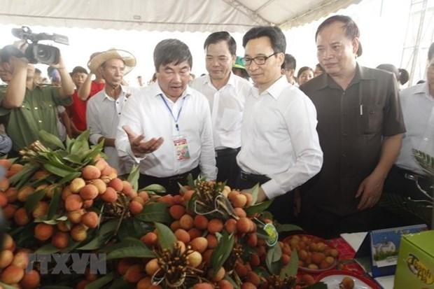 Ouverture de la toute premiere fete des letchis a Hai Duong hinh anh 1