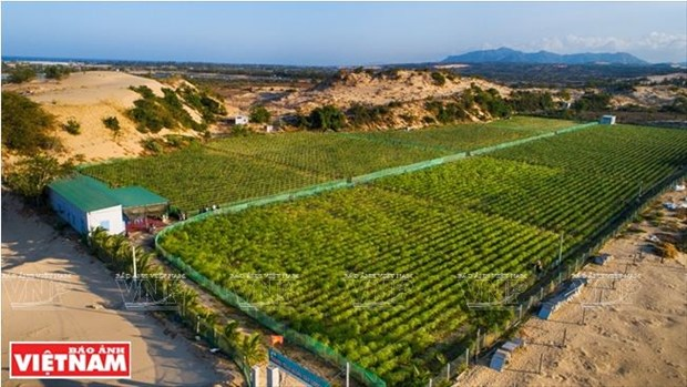 Comment Ninh Thuan developpe sa propre resilience agricole hinh anh 4