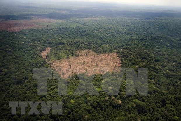 La Chine aide le Cambodge a proteger l'environnement hinh anh 1