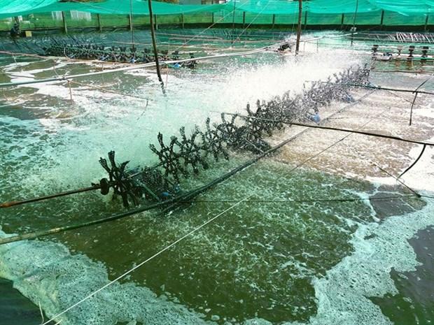 Israel cherche un partenariat pour importer les crevettes de Bac Lieu hinh anh 1