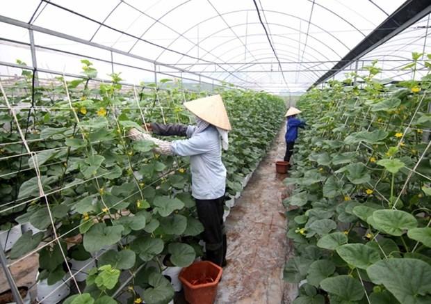 Utiliser les technologies pour creer la valeur ajoutee agricole hinh anh 2