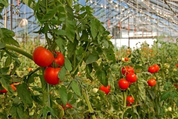 Utiliser les technologies pour creer la valeur ajoutee agricole hinh anh 1