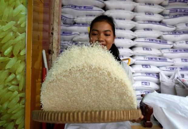 Le Cambodge exporte plus de 271.000 tonnes de riz au premier semestre de 2018 hinh anh 1