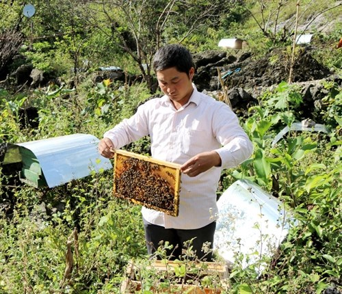 Ha Giang mise sur le maraichage bio et l'apiculture hinh anh 1
