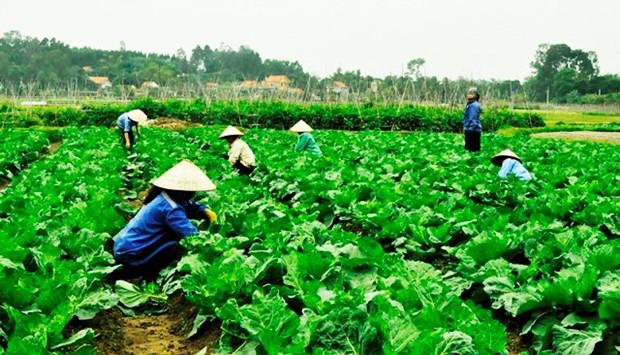 Les produits du terroir favorisent le developpement economique local hinh anh 1