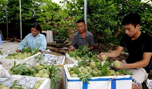 Les produits du terroir favorisent le developpement economique local hinh anh 2