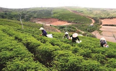A Lam Dong, la restructuration agricole ranime la commune de Loc Bao hinh anh 1