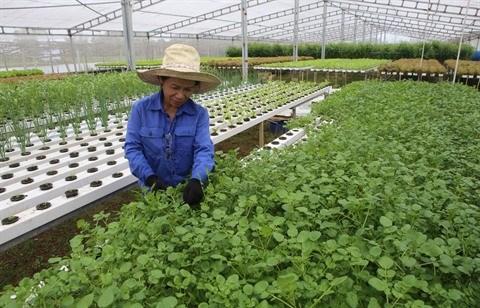 Da Nang met le cap sur l'agriculture high-tech hinh anh 1