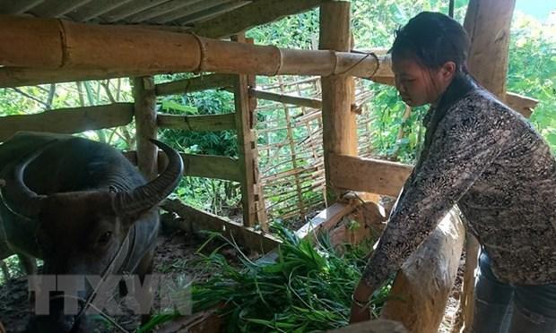 Thua Thien-Hue accorde un fonds de 11 millions d'USD pour soutenir les habitants montagneux hinh anh 1