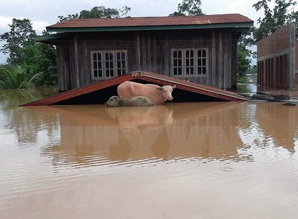 Les inondations generalisees font des ravages au Laos hinh anh 1