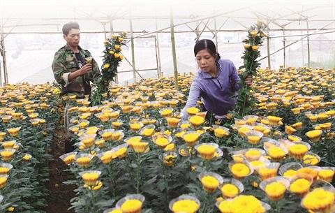 Les villages de metiers de Lam Dong s'ouvrent aux visiteurs hinh anh 1