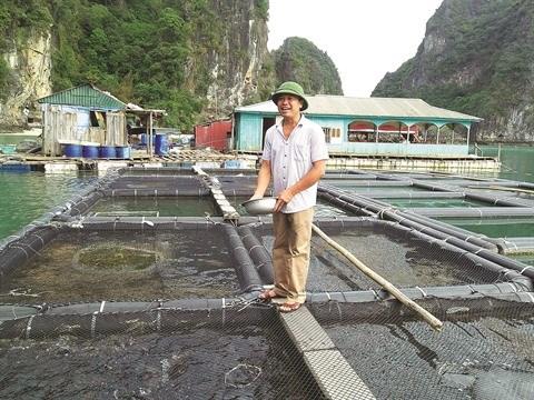 A Quang Ninh, la mer a de la ressource hinh anh 1
