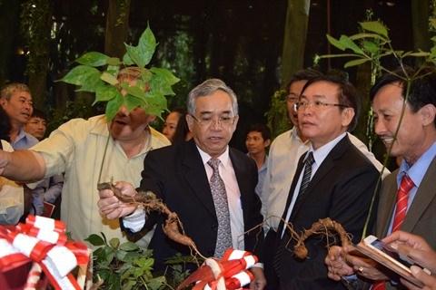 Le ginseng de Ngoc Linh, un tresor national a cultiver hinh anh 1