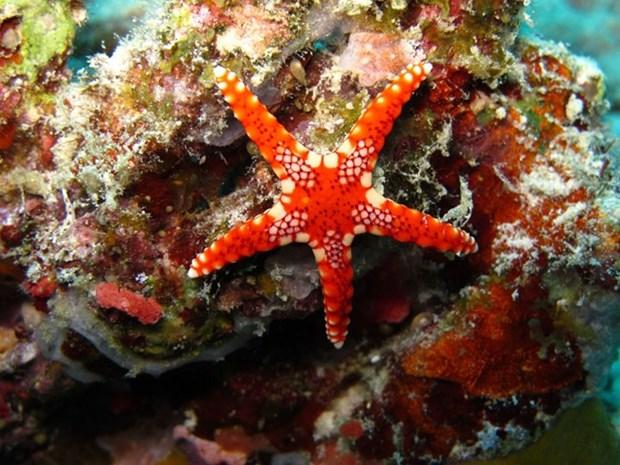 L'Indonesie accueille la conference sur les oceans hinh anh 1