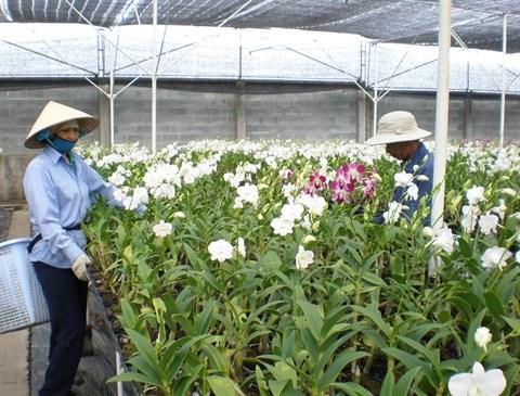 Orchidees et bonsais auront leurs festivals a Ho Chi Minh-Ville hinh anh 1