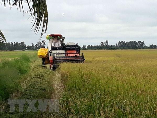 Le 3e Festival du riz du Vietnam prevu en decembre prochain hinh anh 1