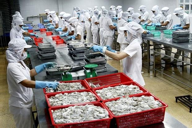 Les cephalopodes du Vietnam exportes dans 61 pays et territoires hinh anh 1