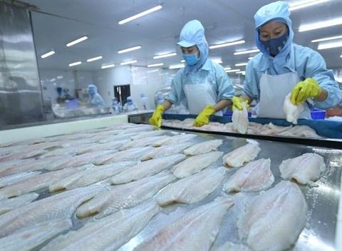La production de pangasius sous la pression de l'offre hinh anh 1