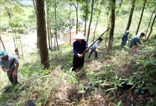 Quang Nam : lancement d'un projet pour la gestion forestiere durable hinh anh 1