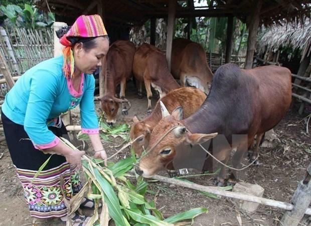 Vietnam : 6 millions de personnes ont echappe a la pauvrete hinh anh 1