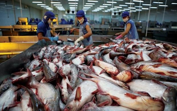 La Chine, un marche prometteur pour les poissons tra du Vietnam hinh anh 1