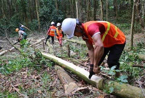 L'APV/FLEGT: les opportunites de la filiere bois vietnamienne hinh anh 1