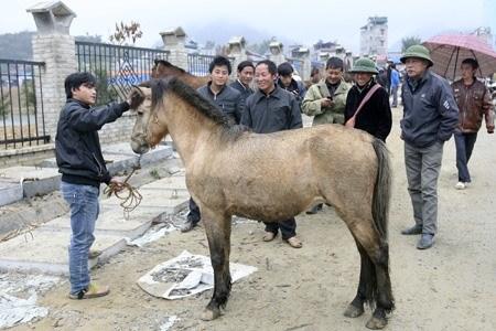 Lao Cai: le marche aux chevaux de Bac Ha, une fete haute en couleurs hinh anh 2
