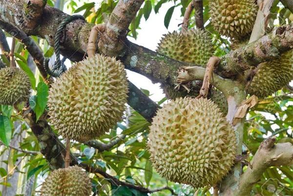 Les 7 produits agricoles du Vietnam pourraient etre exportes en Chine hinh anh 1
