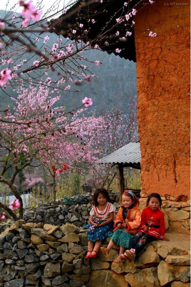 """Plongee dans la """"saison des fleurs sur la pierre"""" a Ha Giang hinh anh 10"""