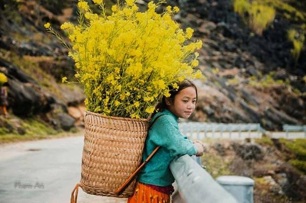 """Plongee dans la """"saison des fleurs sur la pierre"""" a Ha Giang hinh anh 4"""