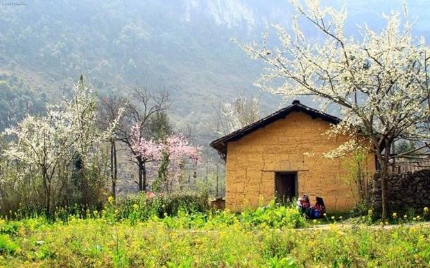 """Plongee dans la """"saison des fleurs sur la pierre"""" a Ha Giang hinh anh 5"""
