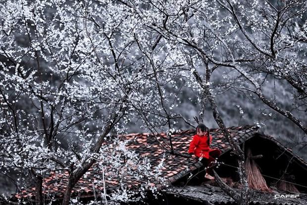 """Plongee dans la """"saison des fleurs sur la pierre"""" a Ha Giang hinh anh 9"""
