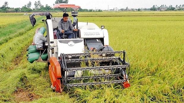 L'agriculture vietnamienne sur le chemin de son integration hinh anh 1