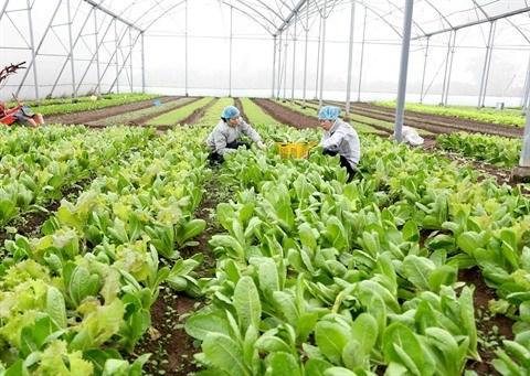Sciences et technologies pour une agriculture moderne hinh anh 1