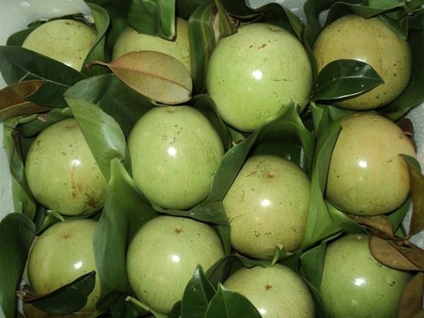 Forte hausse d'exportation de pommes de lait vers les Etats-Unis hinh anh 1