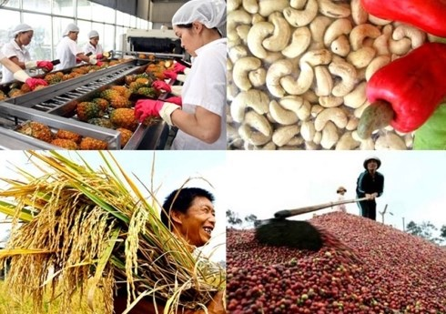 Le secteur agricole connait un excedent commercial en deux mois hinh anh 1