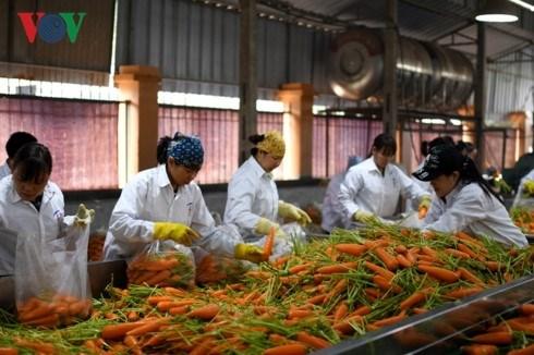 Agriculture: cooperation entre les producteurs et les transformateurs hinh anh 1