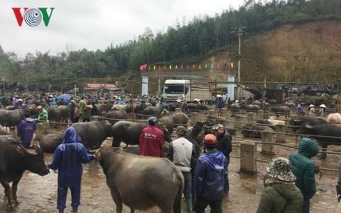 Tra Linh, le plus grand marche aux bestiaux du Nord hinh anh 1