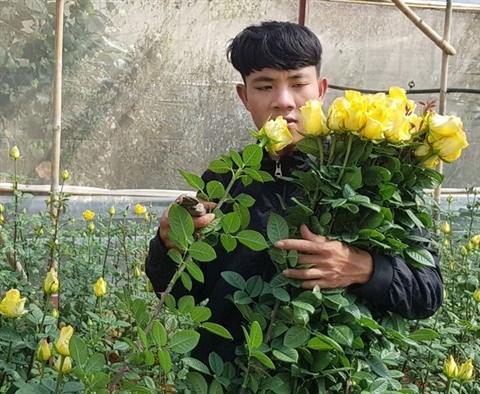 Au pied de la montagne Lang Biang, on a fait fortune grace aux roses hinh anh 1