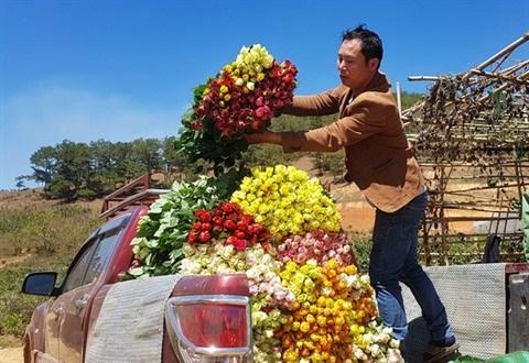 Au pied de la montagne Lang Biang, on a fait fortune grace aux roses hinh anh 3