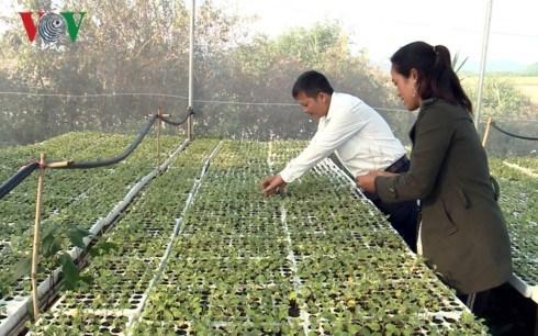 L'agriculture intelligente donne du tonus aux cultivateurs a Gia Lai hinh anh 1