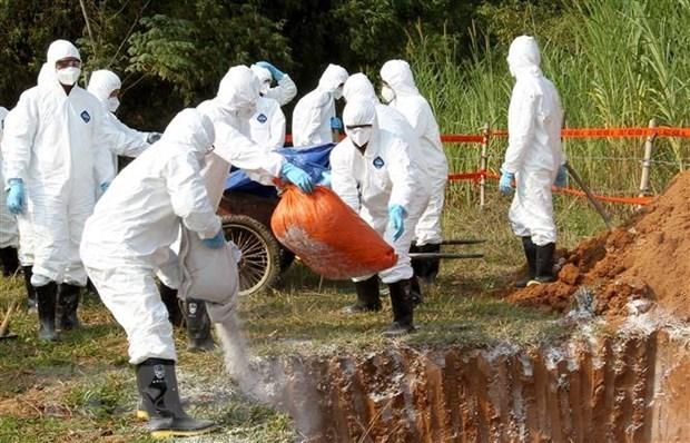 Le Cambodge signale le premier foyer de peste porcine africaine hinh anh 1