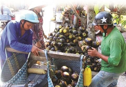 A Bay Nui, le sucre de palme remporte la palme hinh anh 2